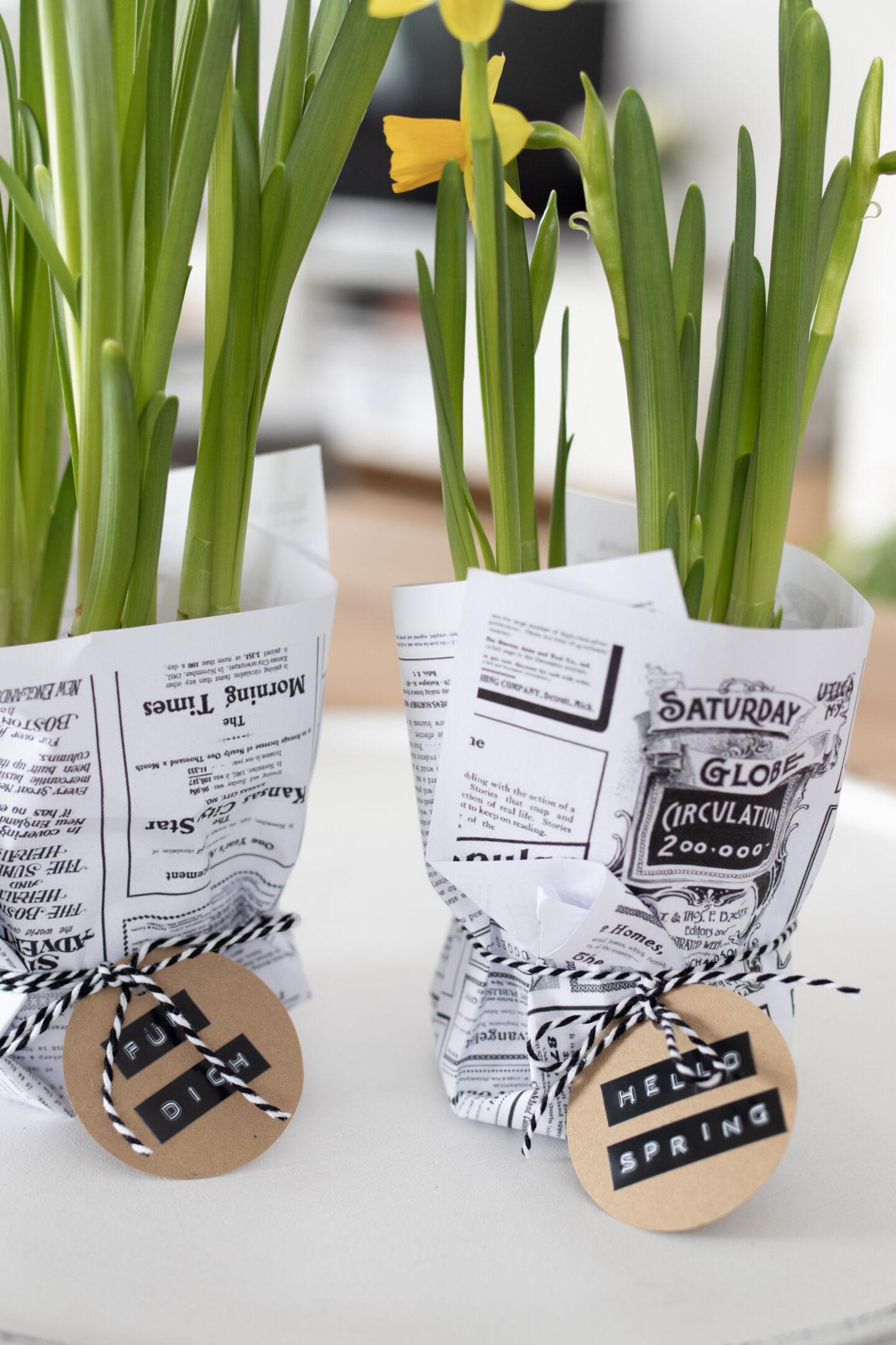 Geschenkidee: Narzissen mit Zeitungspapier schnell und einfach verpacken